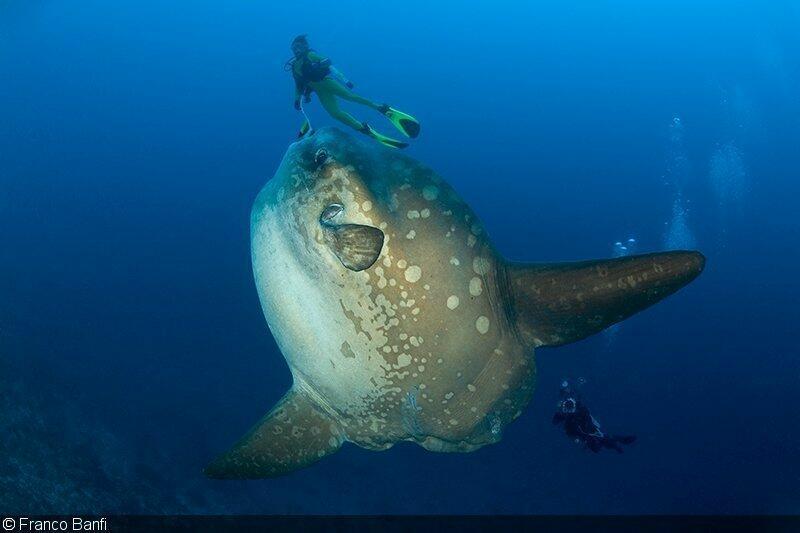 bali scuba diving extrevity-1