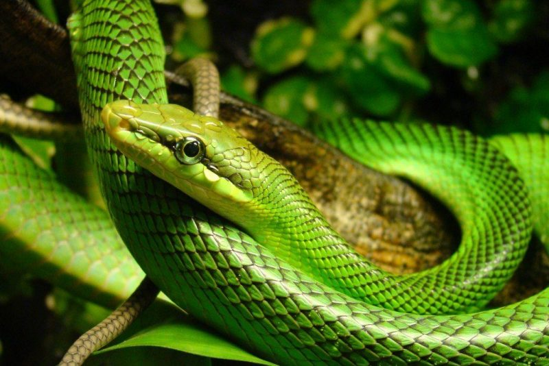 Bali Reptile Tours - Extrevity